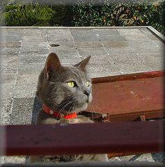 Mia vicina gatta