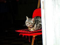 Miao - (in copertina)