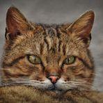 Miao Miao