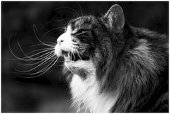 Miau....