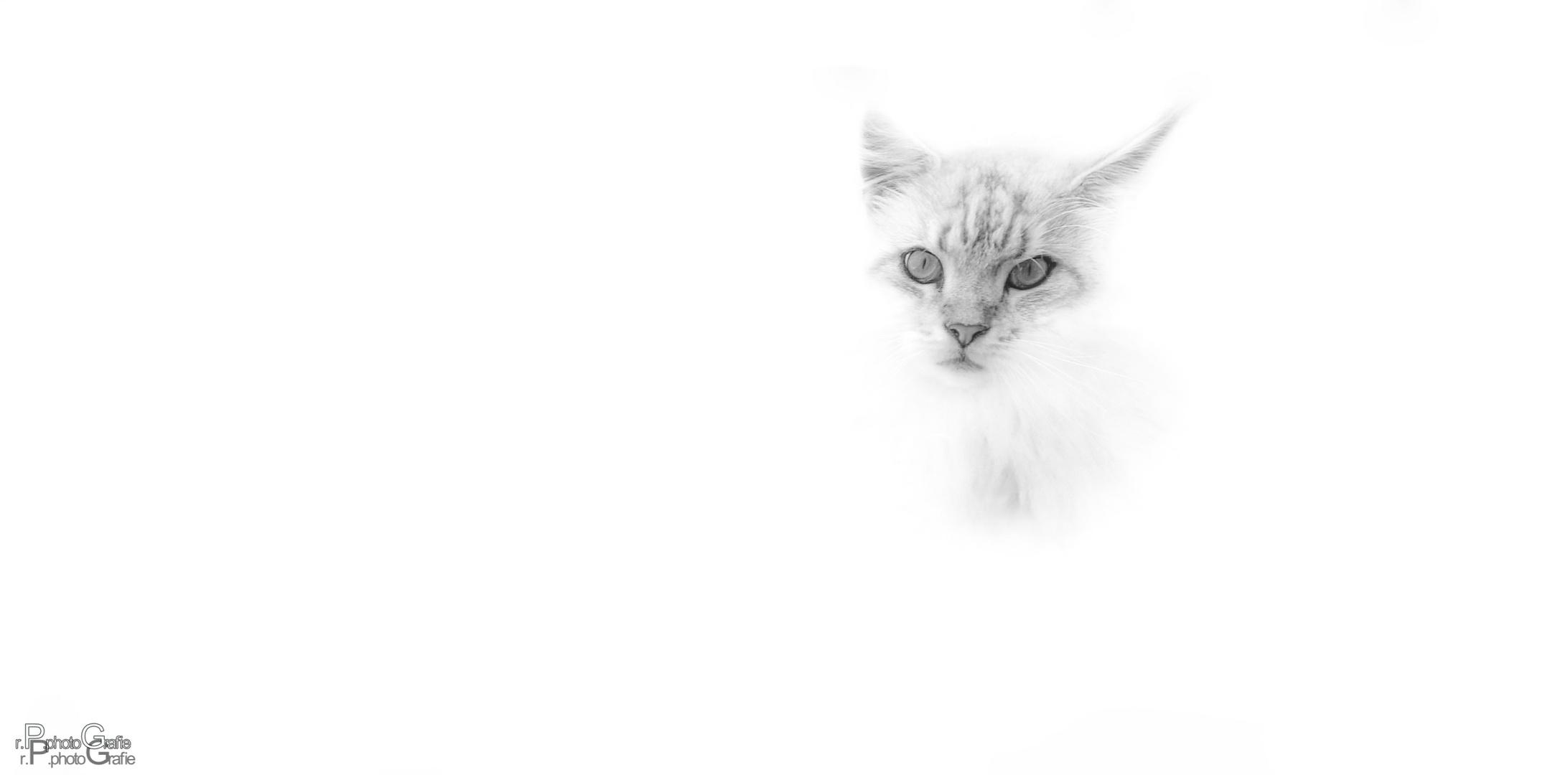 """""""Miau"""" """"Miau"""""""