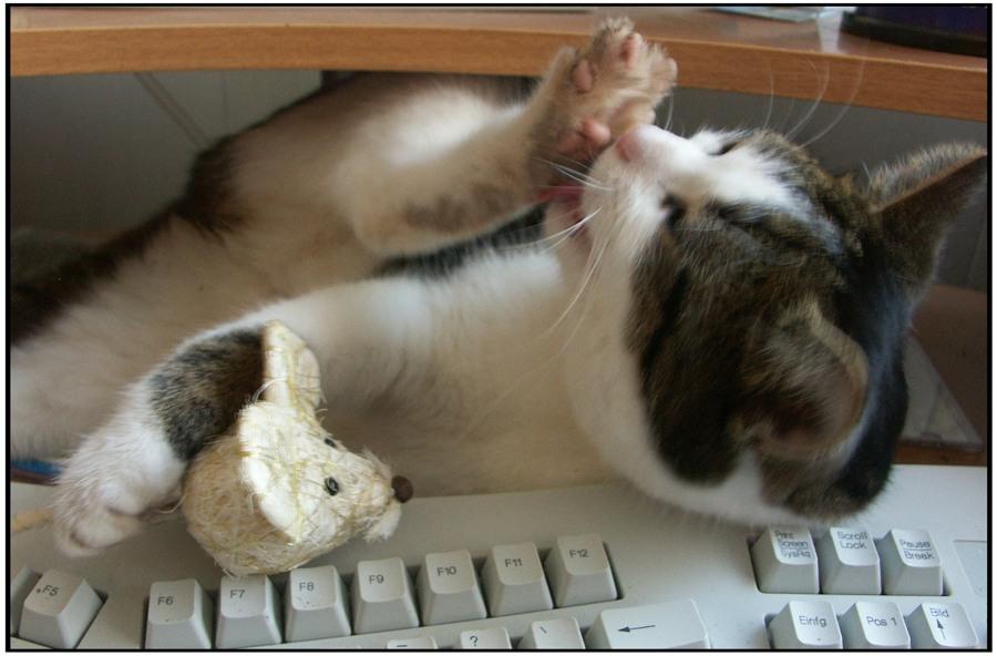 Miauuu he Maus kennst Du Cat-Tap-Fu ?