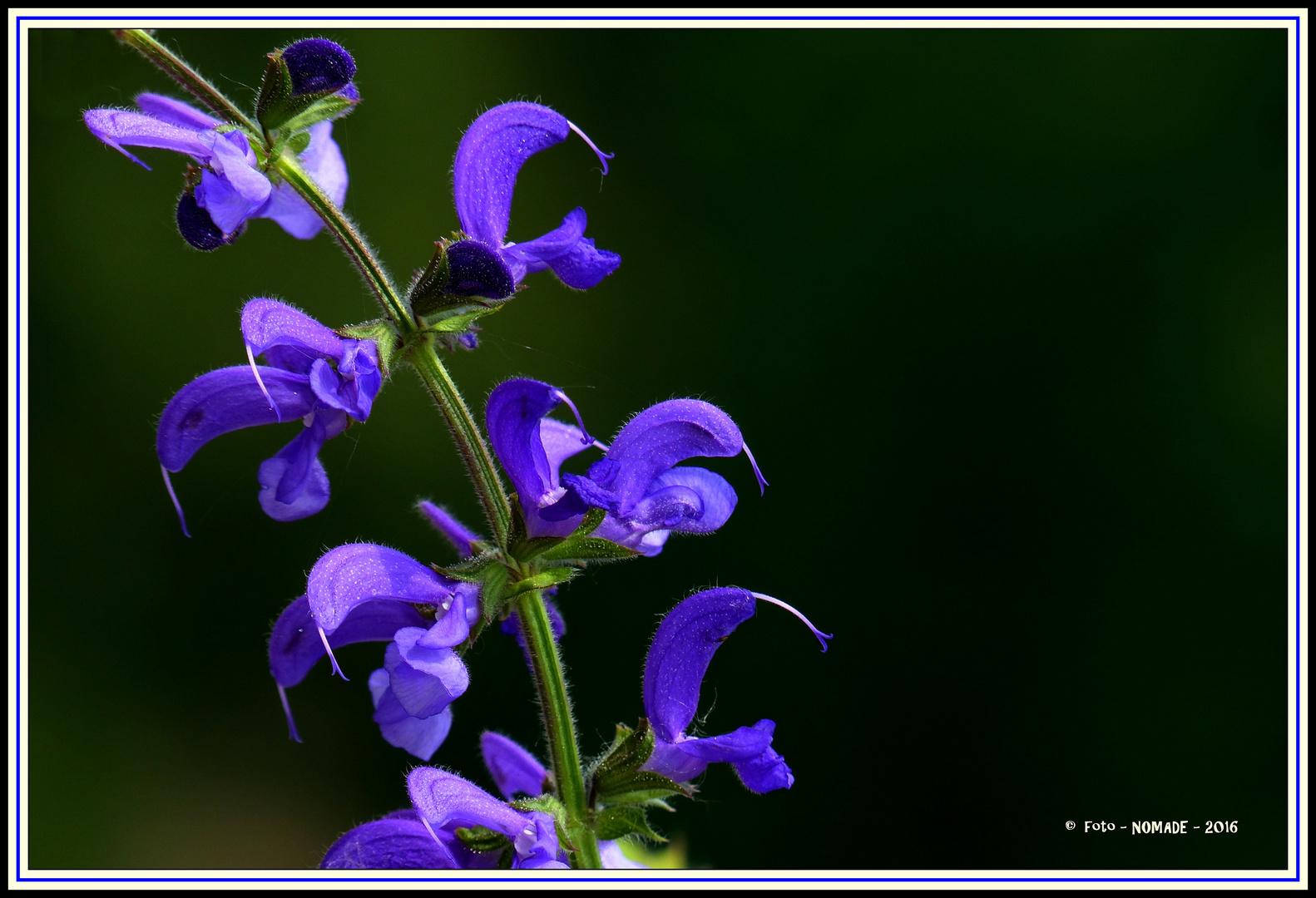 Mich immer wieder faszinierende Blüte