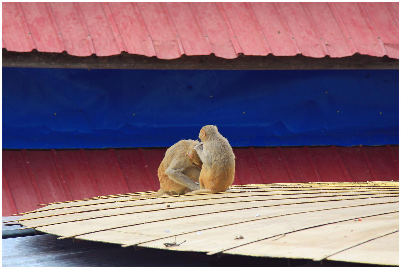 Mich laust der Affe.....