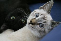Micio & Macho
