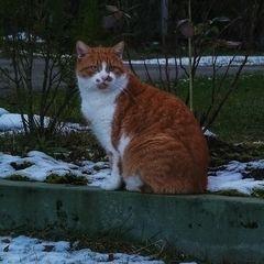 Micky im Winter