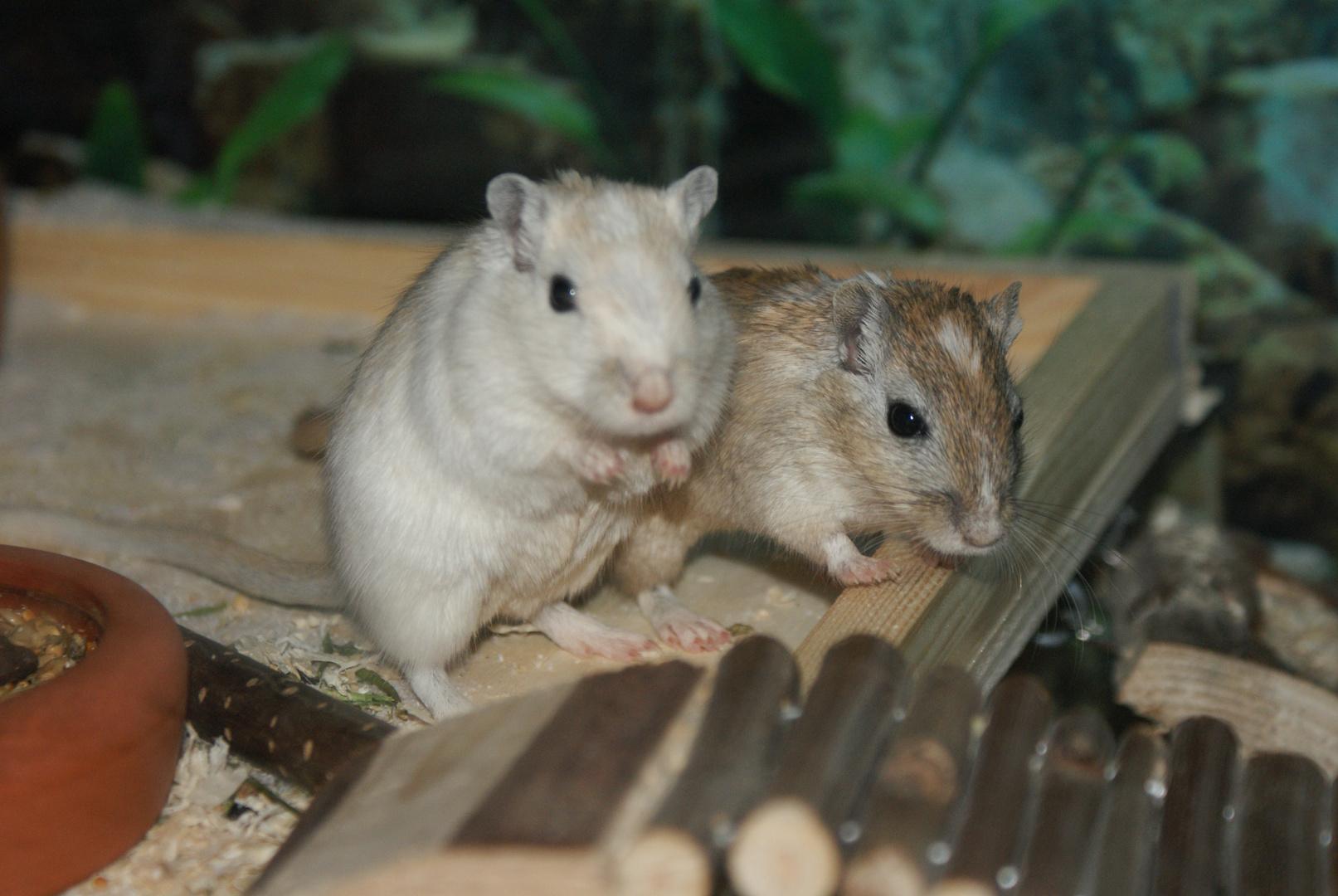 Micky & Minni