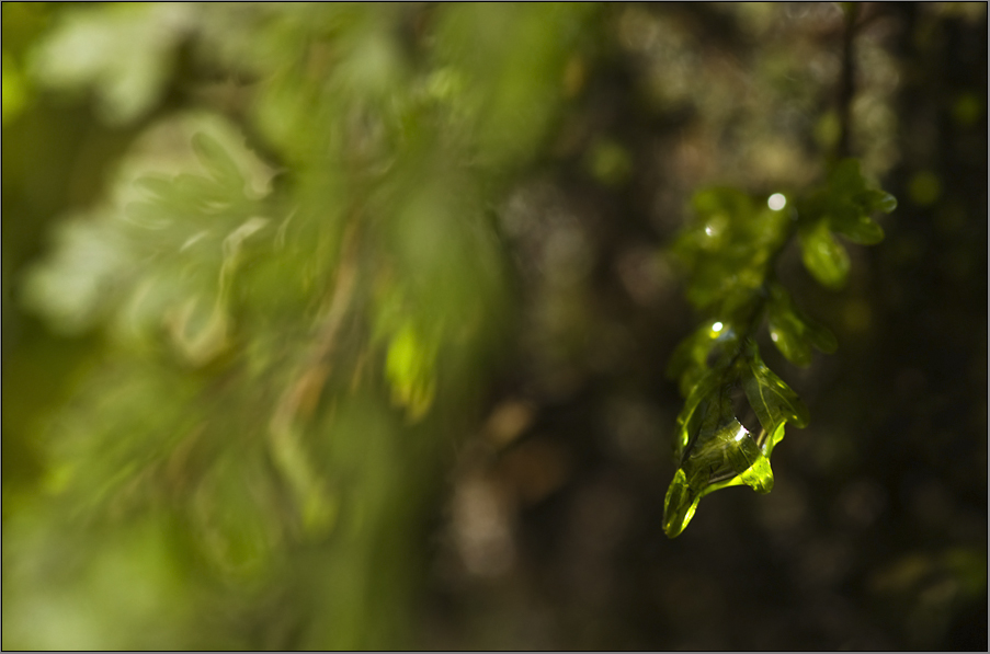 microcosm in the subtropical rainforest