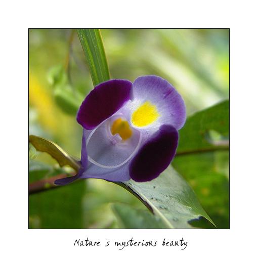 Microflower