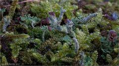 Microlandschaft auf einem alten Zaun...