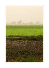 Midday fog (04.10.07) Zeeuws-Vlaanderen