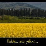 Middle....and yellow....