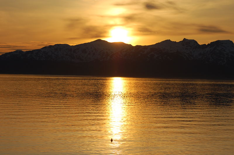 MIdnightsun and the seagull