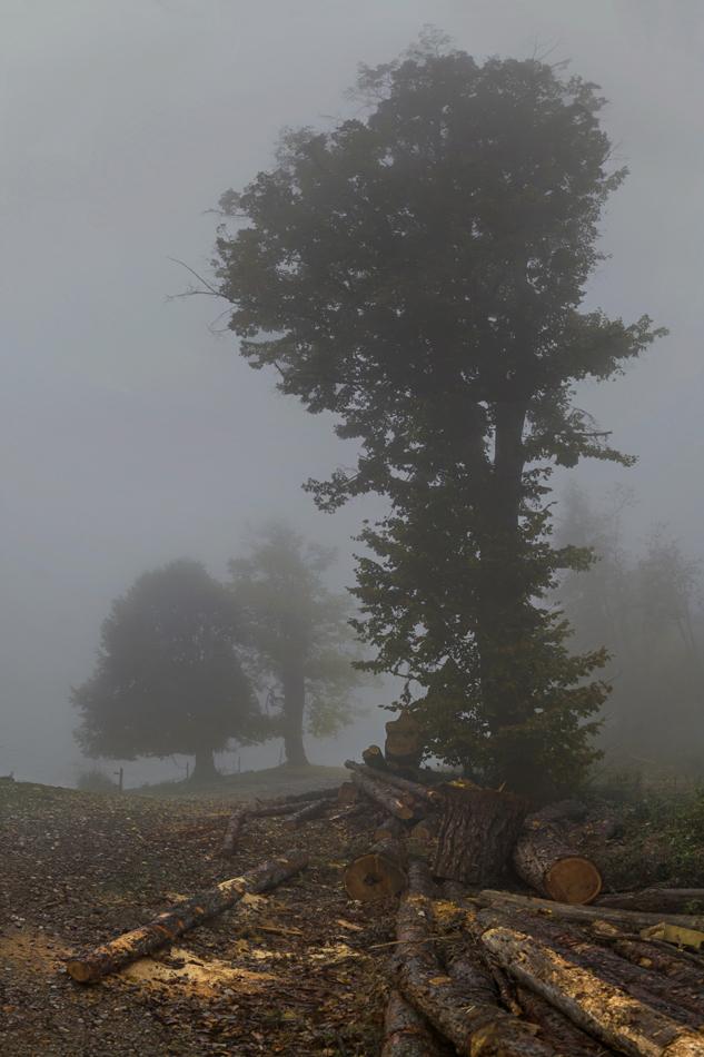 Mieses Nebelwetter im Herbst! (2)