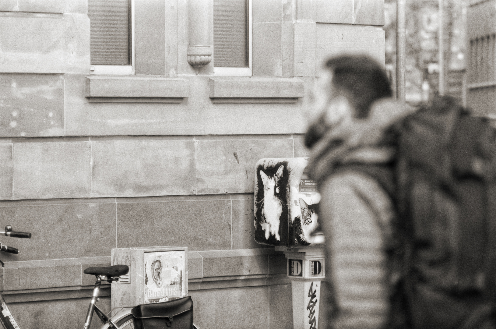 Mietzekatzenkasten mit Rucksack und Fahrrad
