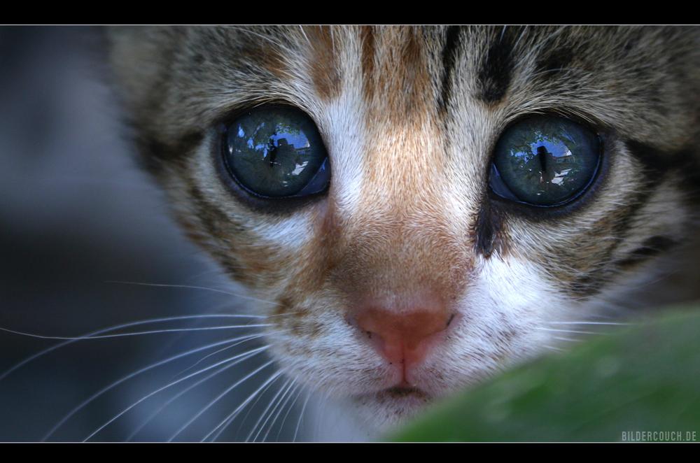 miezekatzen-augen-alarm