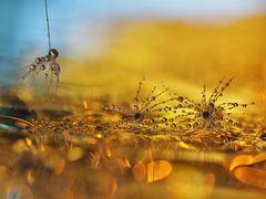 Mikro-Herbst