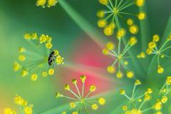 Mikrokosmos Blumenwiese