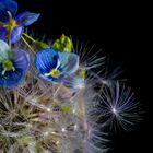 Mikroskopisch