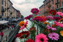 Milano, naviglio e fiori