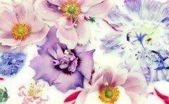 Still Life / Flowers