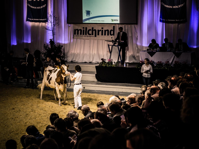 milchrind