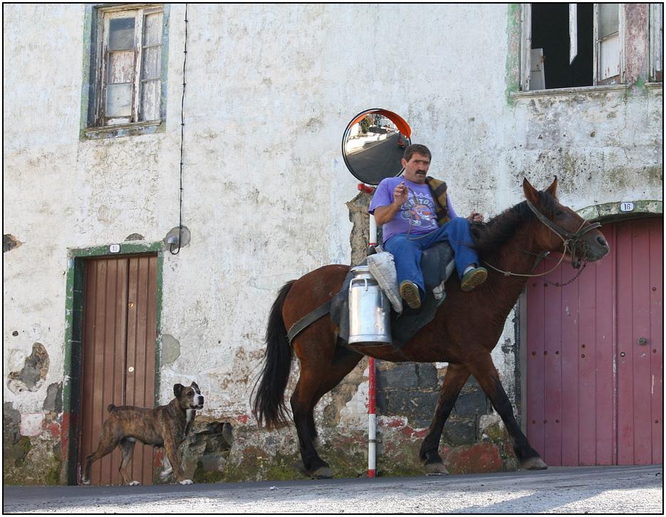 Milchtransport auf São Miguel .....