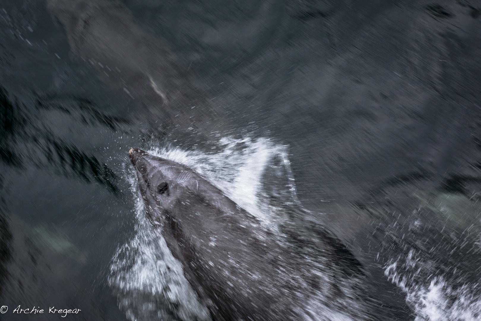 Milford Sound #4