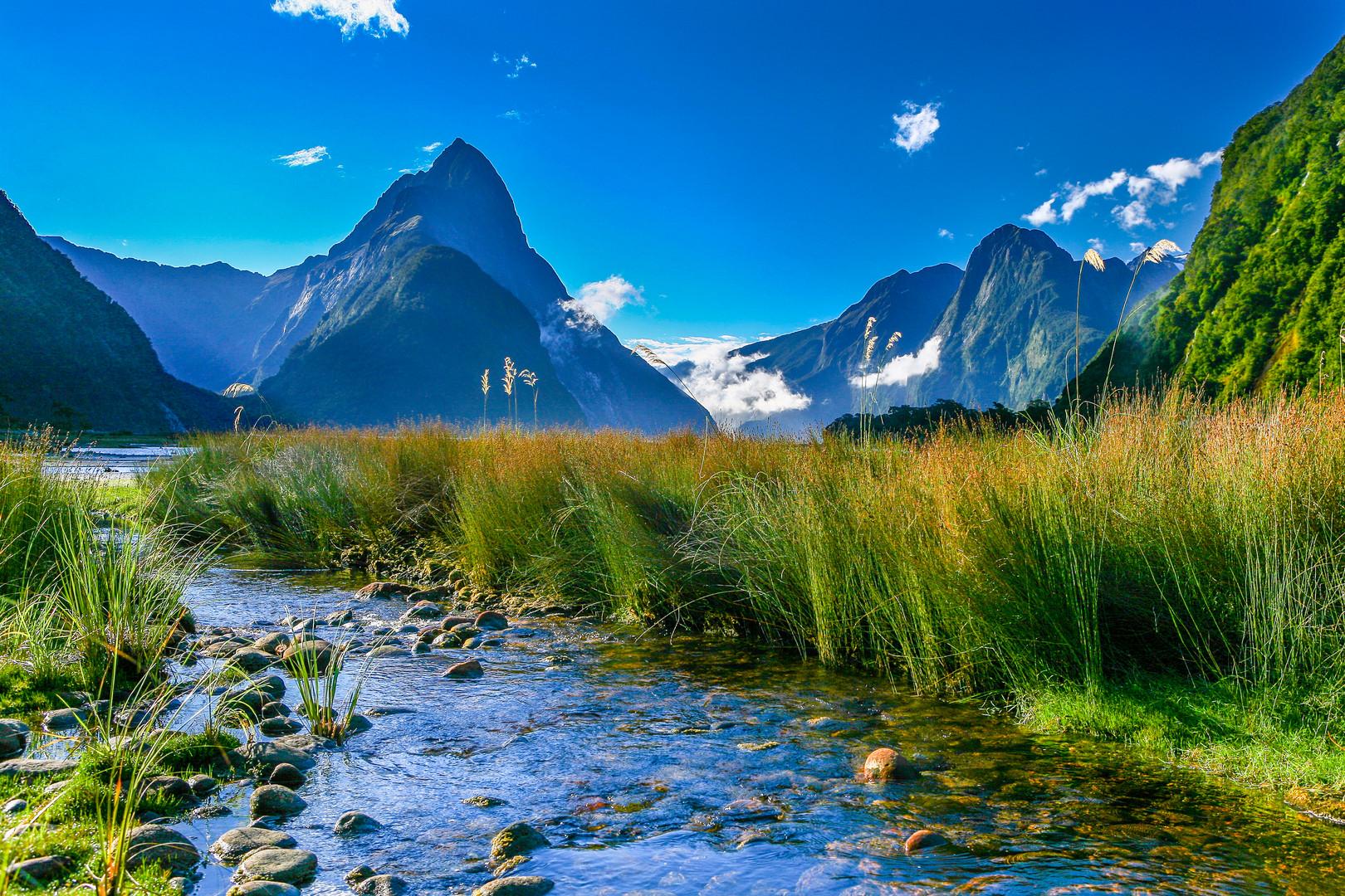 Neuseeland Detail: Milford Sound Neuseeland Foto & Bild