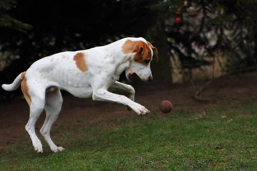 Milow und der Ball.....