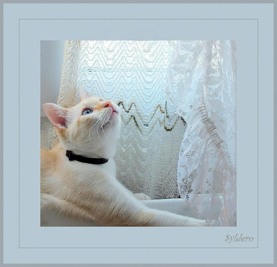 Mimi aime bien mes rideaux