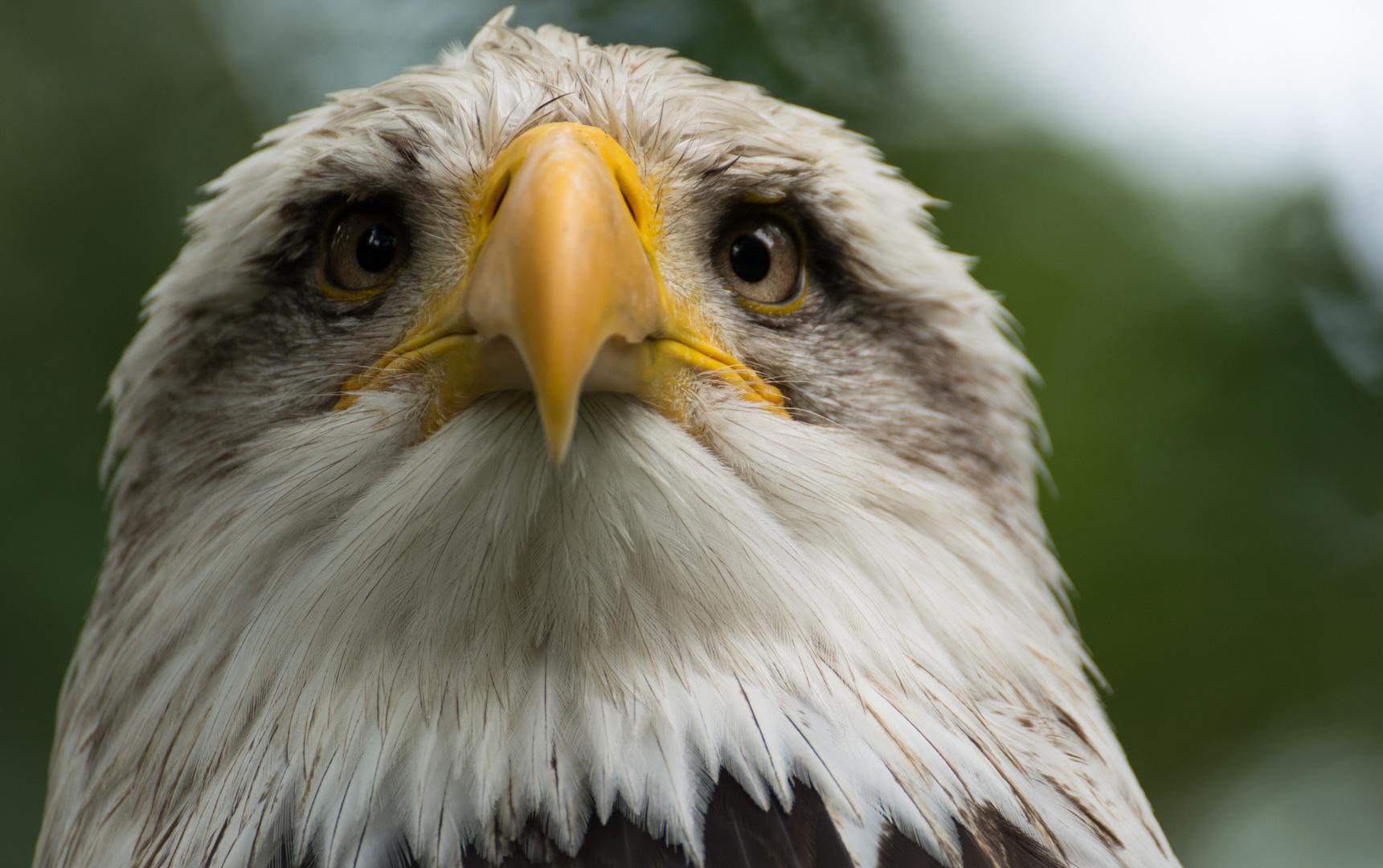 Mimik eines Adlers