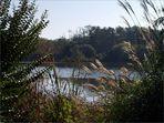 Mimizan - Vue sur le lac depuis la promenade fleurie