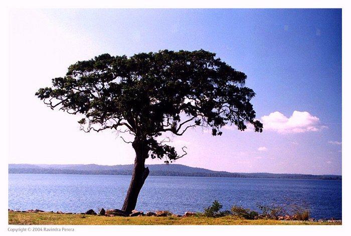 Mineriya Lake - Sri Lanka