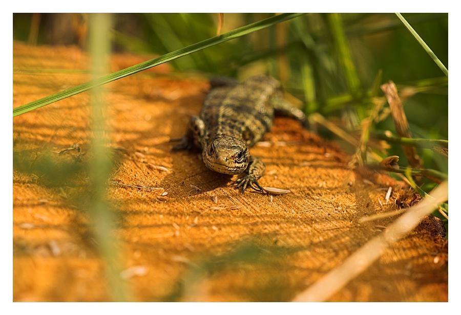 Mini Alligator :-)
