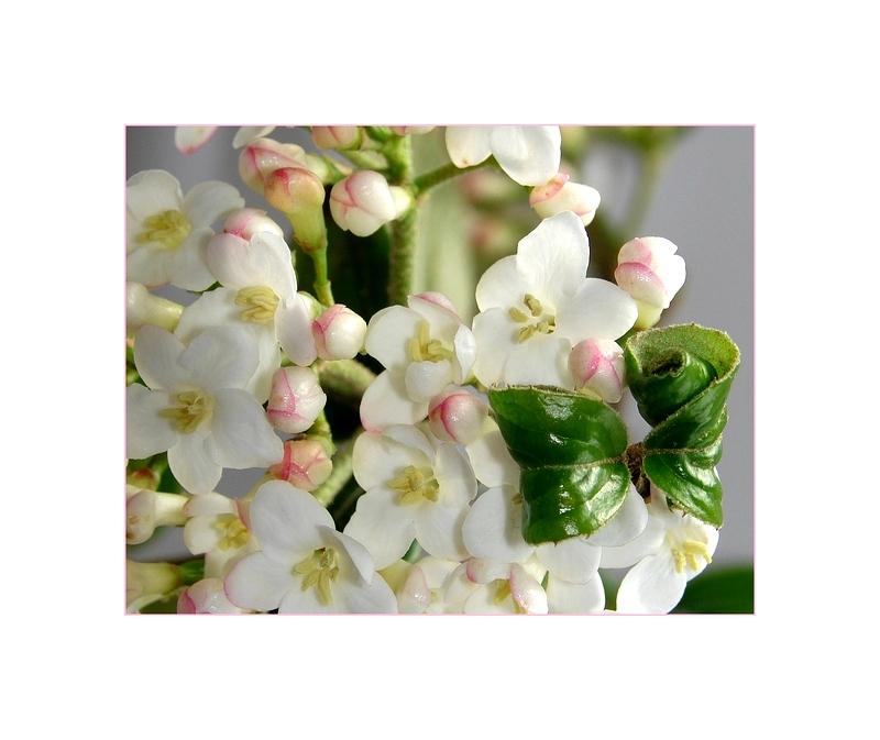 Mini-Blüten