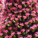 Mini-Blüten im Überfluss