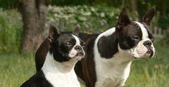Mini-Doggies in the Sun