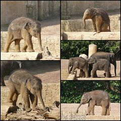Mini-Elefanten im Zoo Hannover
