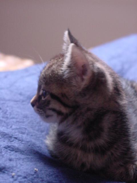 Mini-Katzen-Profil