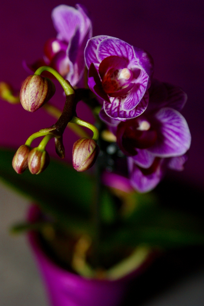 Mini Orchidee .1.
