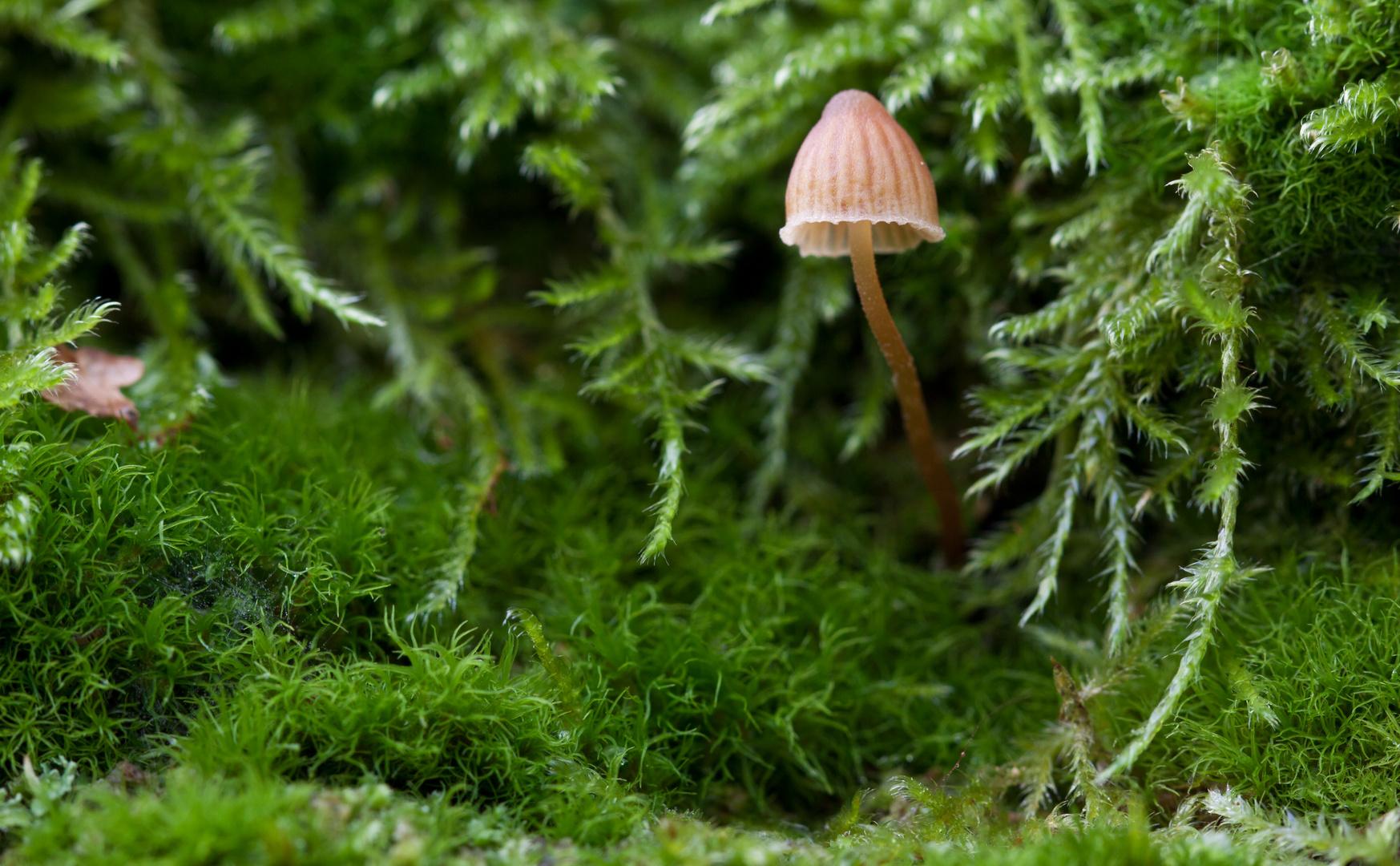 Mini Pilz am Baum