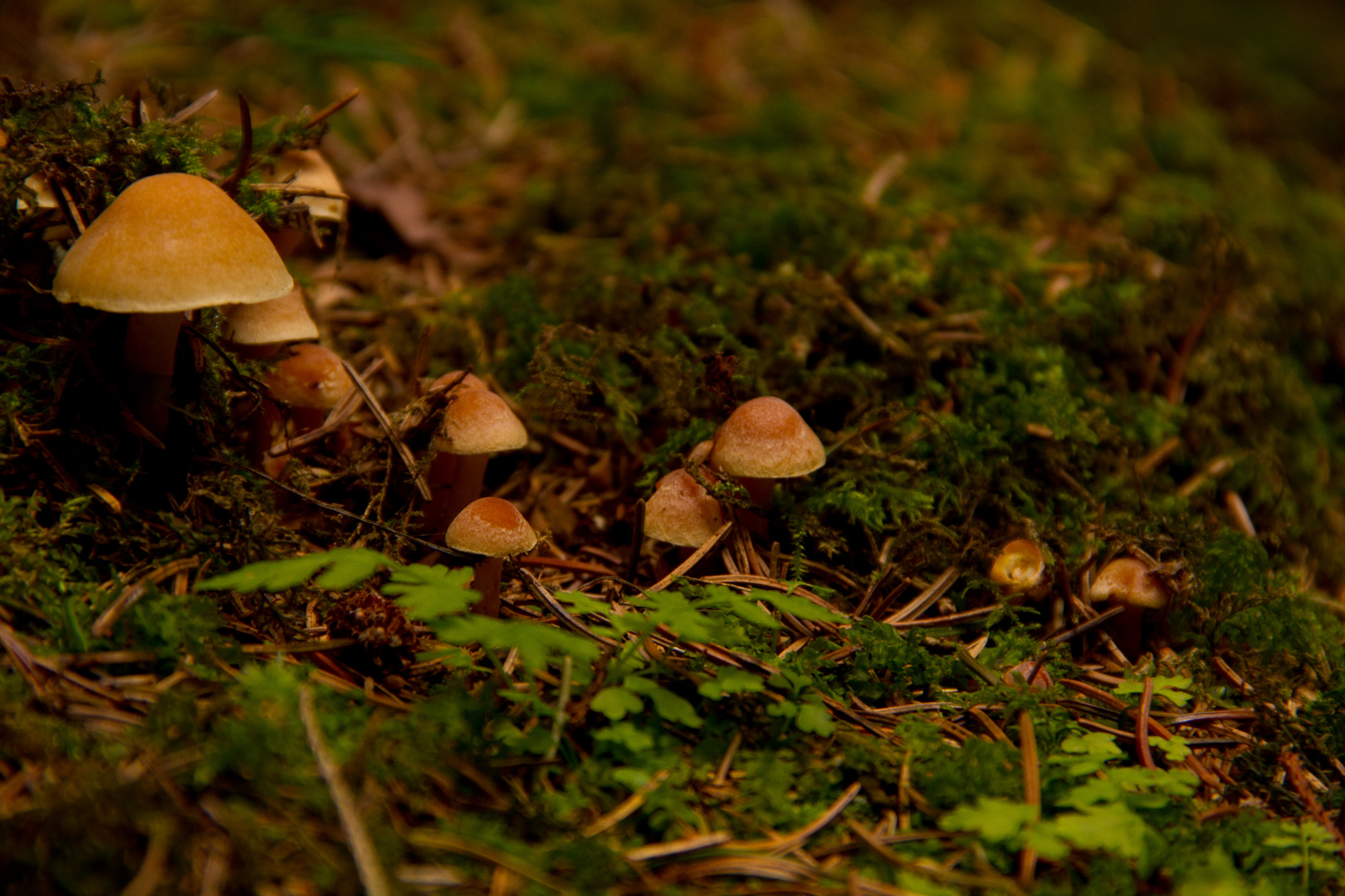 Mini Pilze