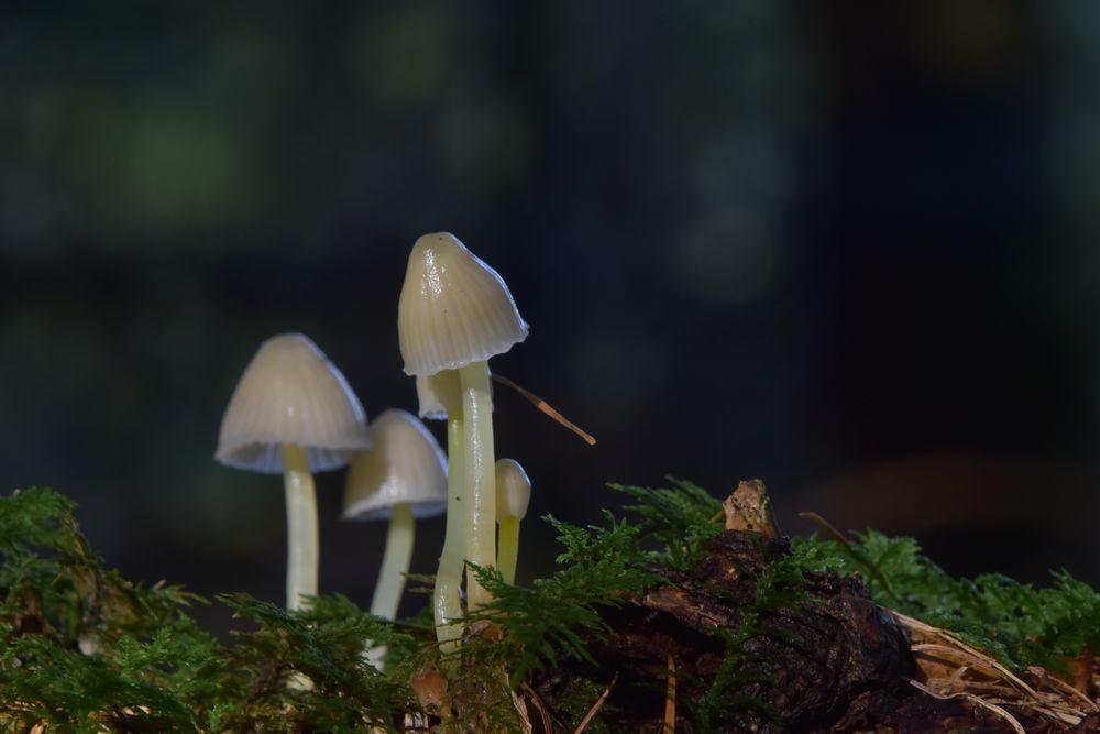Mini Pilzfamilie !