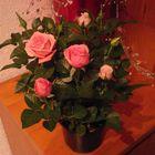 mini rosal