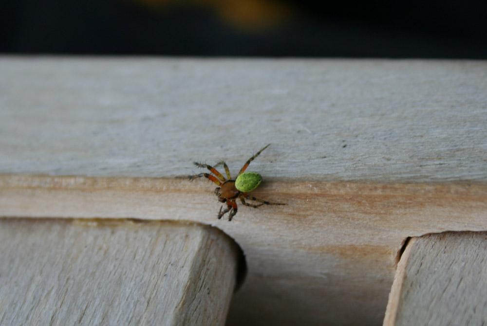 Mini Spinne auf einem Stuhl