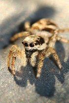 Mini Spinne ganz groß