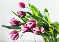 Mini-Tulpen