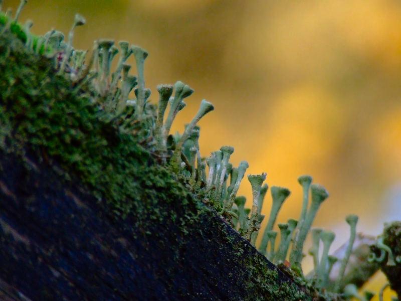 Miniatur Wald