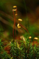 Miniatur-Wunderland 1
